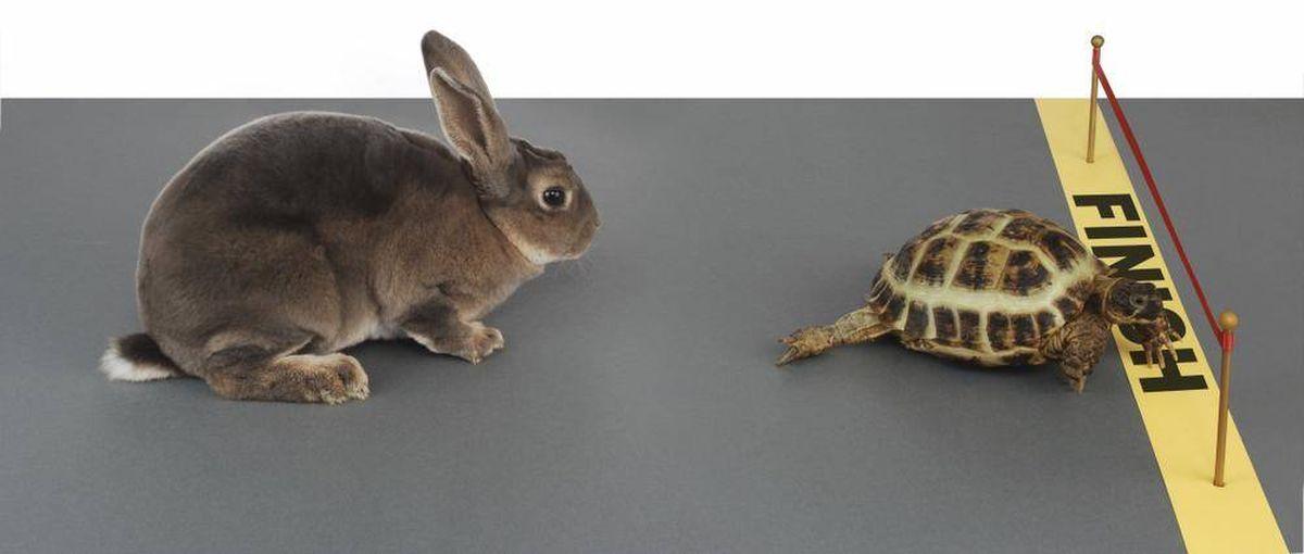 De gefocuste kracht van de schildpad