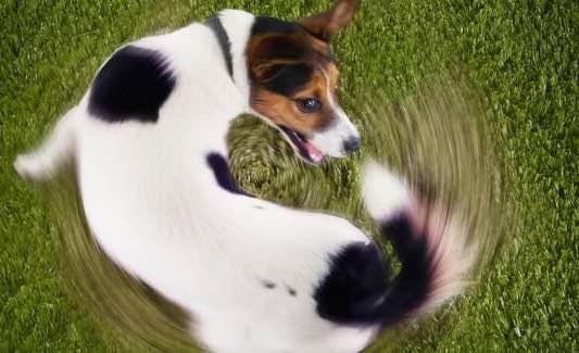 Als een hond die achter zijn eigen staart rent